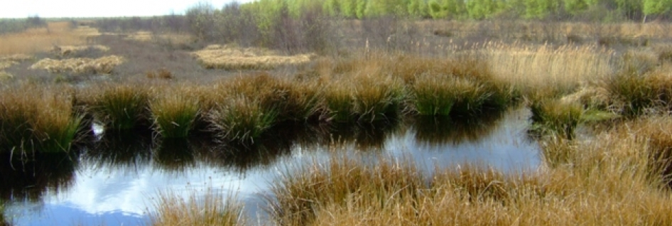 Humber_Peatlands_National_Nature_Reserve_-_geograph.org.uk_-_788401_946x318_scaled_cropp